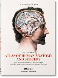 Photos Of Human Anatomy Jean Marc Bourgery Atlas Of Human Anatomy And Surgery