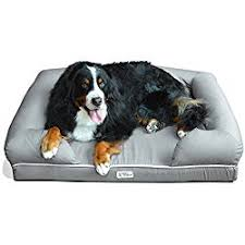 7 best memory foam dog beds the comfiest bed for your canine
