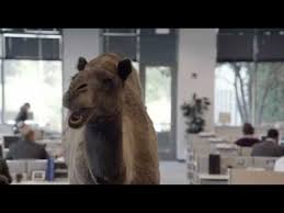 Hump Day Camel Meme - geico hump day remix guess what day it is camel final happier