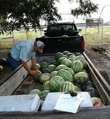 Texas A U0026m Agrilife