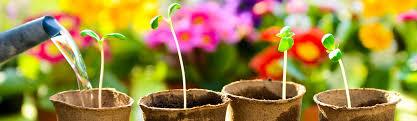 landschaftsbau kã ln garten landschaftsbau köln und umgebung
