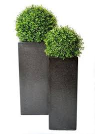 Topiary Balls With Flowers - boxwood balls in tall modern planters these topiary trees look