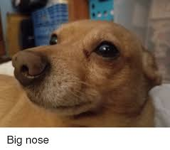 Big Nose Meme - big nose and big nose meme on astrologymemes com
