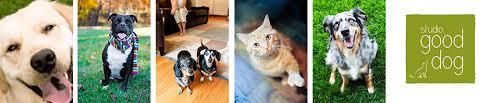 five acres animal shelter annual christmas card studio good dog blog