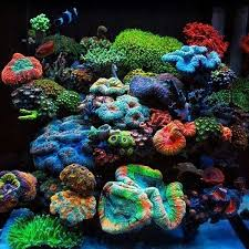 Floating Aquascape Reef2reef Saltwater And Reef Aquarium Forum - show me your pillars page 3 reef central online community