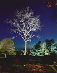 Landscape Lighting Packages - charitybuzz landscape lighting package from design lighting by