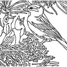 baby bird nest coloring pages sketch coloring