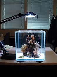 mini aquarium design ideas aquarium decorations aquariums and