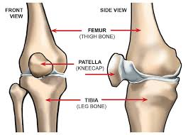 Anatomy Of Knee Injuries What Are The Parts Of The Knee Joint Systems4knees