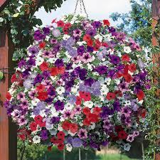 balkon grã npflanzen 21 balkonpflanzen die zu ihrem eingenen balkon passen