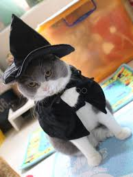 cat halloween costumes wizard black cape with hat pet costume
