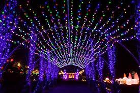 phipps conservatory christmas lights phipps conservatory winter flower show and light garden eat work