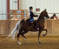 training verrill stables