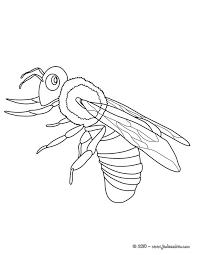 Coloriages Insectes  Coloriages  Coloriage à imprimer gratuit  fr