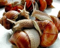 escargot cuisine snails seven lives at l escargot montorgueil