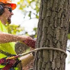 fast tree removal services tree services 3379 peachtree rd