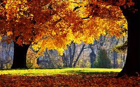 autumn pumpkin wallpaper widescreen pumpkin wallpaper 1600x1200 59812