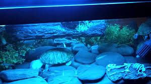 coffee table aquarium coffee table 99 dreaded coffee table aquarium pictures ideas