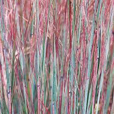 17 top ornamental grasses shades of purple gray green and