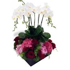 orchid delivery blooming orchid deliver orchids in miami florida miami