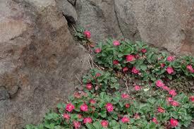 plant botanical names matter garden mentors