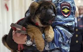 belgian sheepdog crossword clue russia gifts france a replacement for slain police dog the times