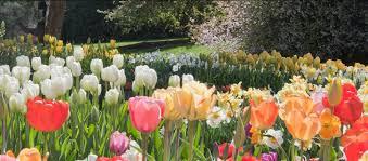 spring blooms longwood gardens