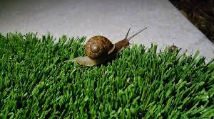Where Can You Find Snails In Your Backyard Kyr Sp33dy On Twitter