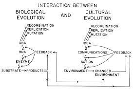 biology free full text evolution of microbial quorum sensing