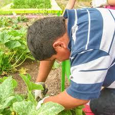 Urban Garden Denver - national salad week how to plant a fall garden mad greens