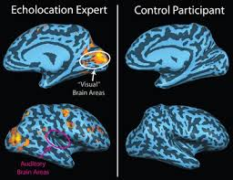 How Do Blind People See Human Echolocation Wikipedia