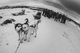 5 places to go dogsledding