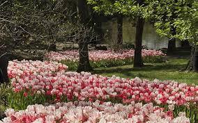 gardens cheekwood estate u0026 gardens nashville