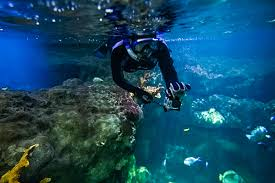Minnesota snorkeling images Snorkeling at the mall of america wander the map jpg