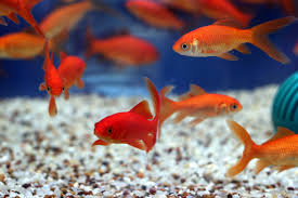 aquarium fish for kids or beginners angie u0027s list