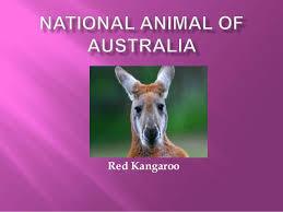 imagenes animales australia national animal of australia 1 638 jpg cb 1462079912