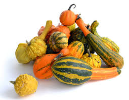 squash pumpkins zucchini other gourds
