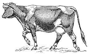 dairy cow vintage clipart free clip art clipartix