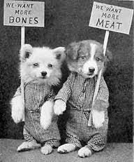 barf diet for pets endangers species barfblog