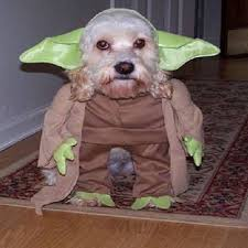 Dog Halloween Costumes Dog Halloween Costumes Photo Album 30 Halloween Costumes