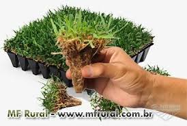 Fabuloso Fornecimento e aplicação de grama em placa ou em rolo em Ipatinga  #KX23