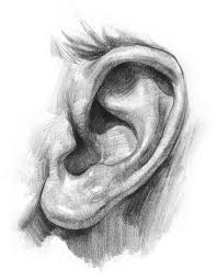 2 now i u0027ll focus on the complex shapes inside the ear make sure