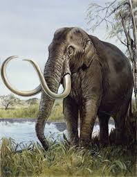 columbian mammoth mammuthus columbi