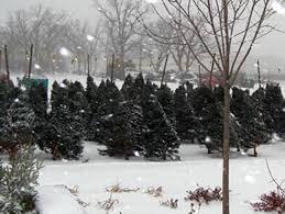 a guide to cut your own christmas tree farms wcco cbs minnesota