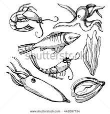 squid shrimp fish octopus seaweed pencil stock vector 442097734