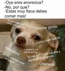 Memes De Chihuahua - memes de chihuahua 28 images mi mam 225 en la casa chihuahua