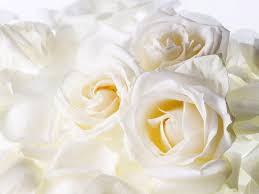 white flower pressed flower delights white flower wallpaper