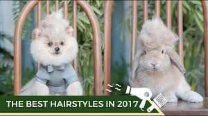 the best hairstyle in 2017 by muji sama むじ さま youtube
