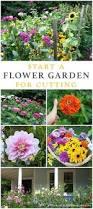 best 25 zinnia garden ideas on pinterest zinnia flower ideas
