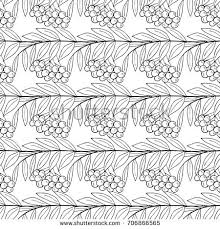 detailed ink drawing rowan rowanberry berries stock illustration